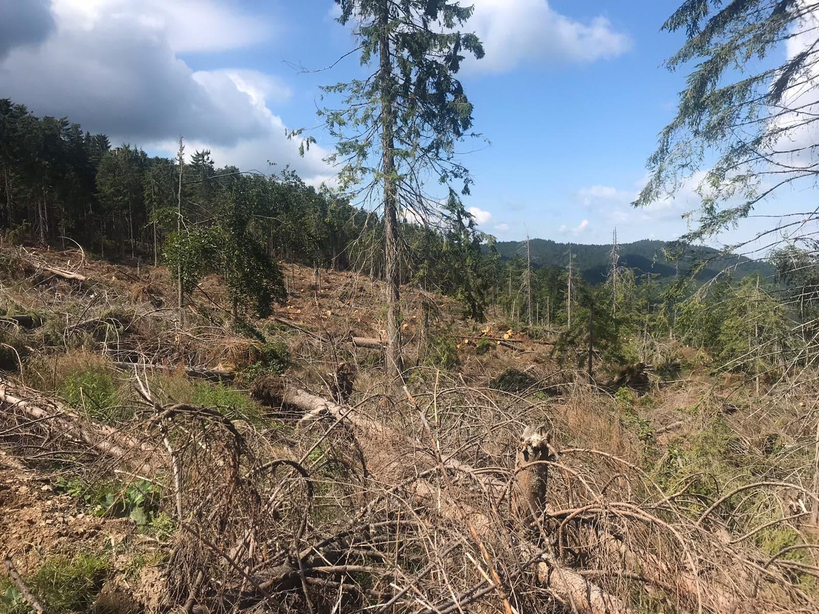 FOTO: Împădurire - Stâna de Vale 23.03.2020